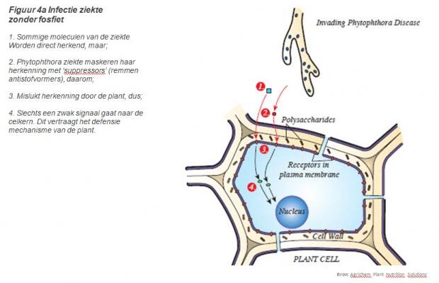 figuur4a.jpg